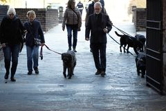 MILAN, ITALY - OCTOBER 9, 2017: group people with dogs. MILAN, ITALY - OCTOBER 9, 2017: group of elderly people with dogs Stock Photo