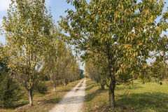 Milan Italy: park of Grugnotorto at fall Stock Images