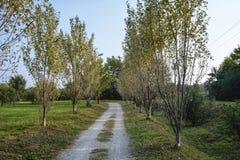 Milan Italy: park of Grugnotorto at fall Stock Photo