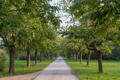 Parco Nord in Milan at fall. Milan, Lombardy, Italy: the park known as Parco Nord at early autumn Royalty Free Stock Images
