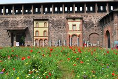 Milan Sforza Castle medieval fortifications, flowering internal garden and ancient brick wall background. Milan Sforza Castle medieval fortifications with royalty free stock photos