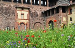 Milan Sforza Castle medieval tower, fortifications, flowering internal garden and ancient brick wall background. Milan Sforza Castle medieval tower and stock photography