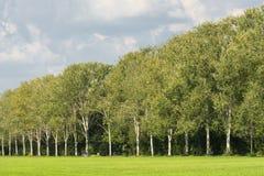 Milano: percorso nel parco Immagine Stock Libera da Diritti
