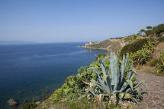 Milazzo. Landscape of milazzo. sea and agave Stock Images