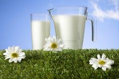 Milch auf Grasfeld Stockbilder