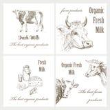 Milch und Kuh Stockfotografie