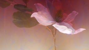 Milchfarbabstrakte Flecke der Tinte im Wasser schlagen die stumpfen Wolken der Blume ein stock video