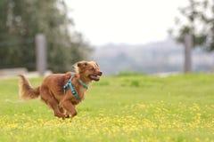 Milchig der Hund stockfotos