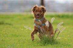 Milchig der Hund lizenzfreie stockbilder