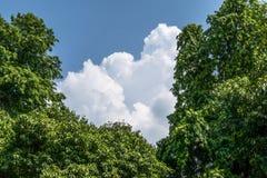Milchige Wolken stockfotos