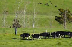 Milchindustrie - Ackerland Stockfotografie