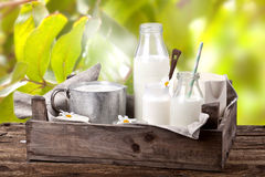 Milchprodukte auf Holztisch Stockfotografie