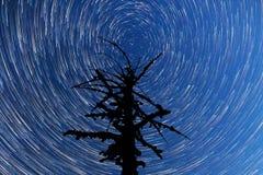 Milchstraße Fallende Sterne Totes Baum-Schattenbild Timelapse Lizenzfreie Stockfotografie