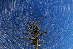 Milchstraße Fallende Sterne Totes Baum timelapse Stockfotografie