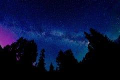 Milchstraße und Aurora Borealis über Baum-Schattenbildern Stockfoto