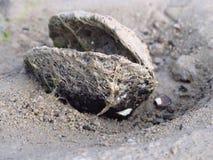 Milczek na piaskowatej plaży przy jeziorem zdjęcie stock