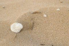 Milczek Na plaży Obrazy Royalty Free