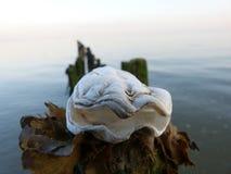 Milczek Shell na Drewnianej poczta Zdjęcia Royalty Free