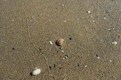 Milczek w mokrym piasku Fotografia Royalty Free