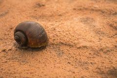 Milczkowie na piasku Obrazy Royalty Free