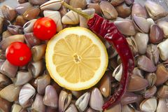 milczkowie zamykają owoce morza tellin Fotografia Stock