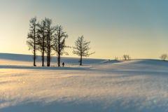 Mild sju kulle i vinter, Biei, Hokkaido, Japan Royaltyfri Bild
