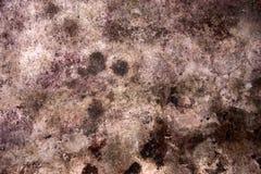 mildew Стоковая Фотография