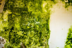 Mildew Royalty Free Stock Photography