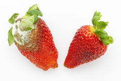 Mildew and fresh strawberries Royalty Free Stock Image
