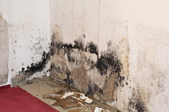 Mildew mould in the living room Royalty Free Stock Photos