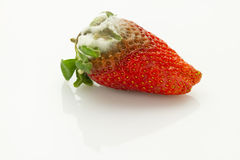 Mildew strawberry Royalty Free Stock Photography