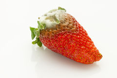 Mildew strawberry Royalty Free Stock Image