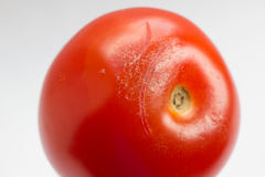 Mildew on a tomato Royalty Free Stock Photography