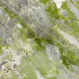 Mildewed concrete wall with green stains Royalty Free Stock Photo