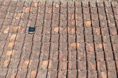 Mildewed terracotta roof tile Stock Images