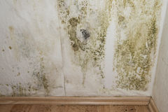 Mildewed Walls. With different sorts of mold (close-up shot Royalty Free Stock Images
