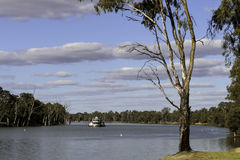 Mildura- Murray River, Victoria. Paddle steamer coming up along the Murray river heading to Mildura township Royalty Free Stock Images