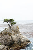 17 Mile Drive-Lone cypress Royalty Free Stock Photo