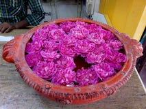 MILE WIDZIANY róże obrazy royalty free
