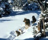 Mile widziany zimy światło słoneczne Zdjęcia Royalty Free