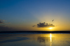 90 Miles Beach Susnet Royaltyfri Fotografi