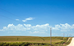 Miles of corn by a dirt road. Cornfields under a blue sky, growing under the summer sun royalty free stock images