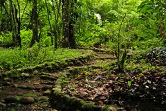 A rock-lined, curviing hiking trail in a Costa Rican ecological reserve. stock photography