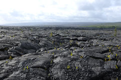 Lava Land Stock Photography