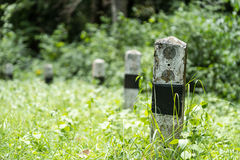 Milestone on road in jungle. Milestone beside the road  with forest background Stock Image