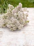Milfoil bouquet Stock Photo