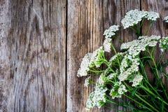 Milfoil Flower on Rustik Wooden Background Stock Photos