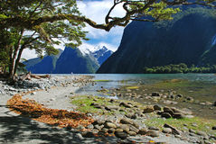 Milford sound. Walkway with a view of Milford sound, New Zealand Stock Images