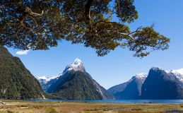 Milford Sound Beautiful Landscape. The fjord of Milford Sound in New Zealand with tree branches leaning over on a bright sunshiney day stock images