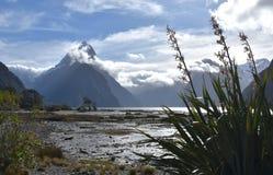 Milford Sound durante la bajamar Foto de archivo libre de regalías